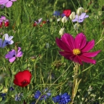 cropped-wildflowers-3571119_1280